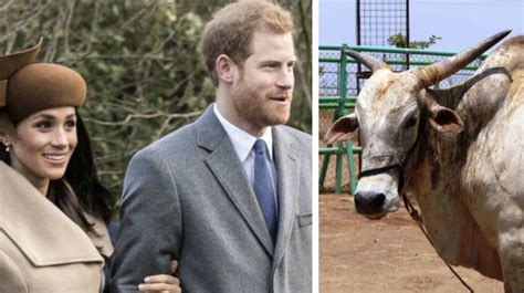 Wedding Gift Vegan by Vegan Charity Gives Prince Harry And Meghan Markle A Bull