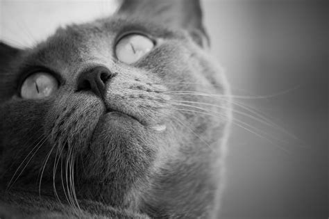 how long do cats live really life expectancy of cats