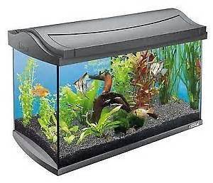 Fish Tanks   Fishbowls & Aquariums   eBay
