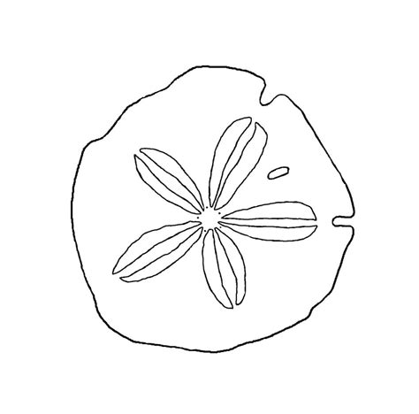 images for gt sand dollar outline clipart best clipart best