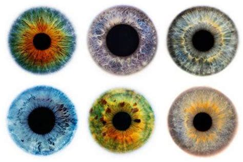 printable iris eyes 1000 images about eyes on pinterest steunk glasses