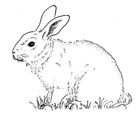 imagen para colrear del ciclo de vida conejo yo biogas com 1 170 experiencia