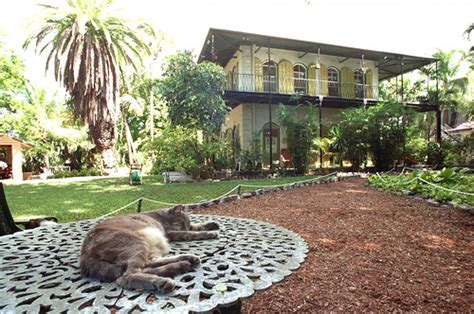 ernest hemingway key west cat at the ernest hemingway home on whitehead street in