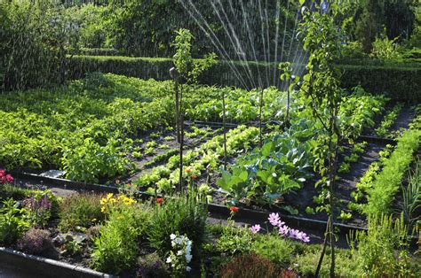 9 Vegetable Gardening Mistakes Every Beginner Should Avoid Beginning Vegetable Gardening