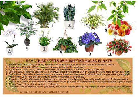 Benefits Of House Plants | 10 purifying house plants and their health benefits urbanfig