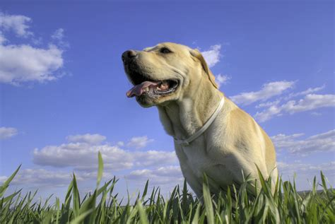 excessive panting in excessive panting in dogs what are some causes of panting