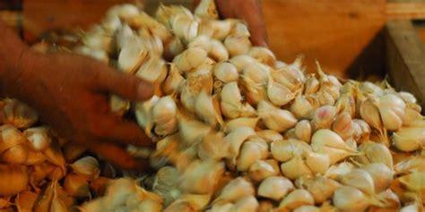 Harga Kacang Bawang Per Kg 2017 by Mendag Juni Harga Bawang Putih Maksimal Rp 30 000 Per Kg