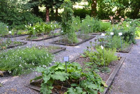 medicinal herb garden in our nature