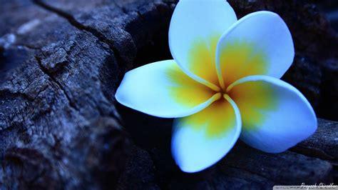flower wallpaper youtube blue flowers youtube