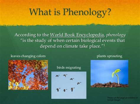 phenological synchrony and bird migration changing climate and seasonal resources in america studies in avian biology books phenology project
