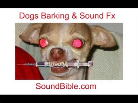 barking sounds barking sounds