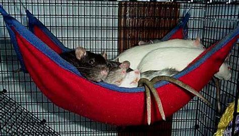 How To Make Rat Hammocks rat hammocks
