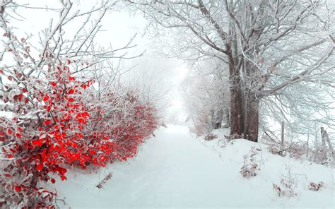 christmas snow landscape wallpaper
