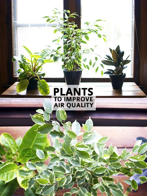 how houseplants can improve air quality in the home