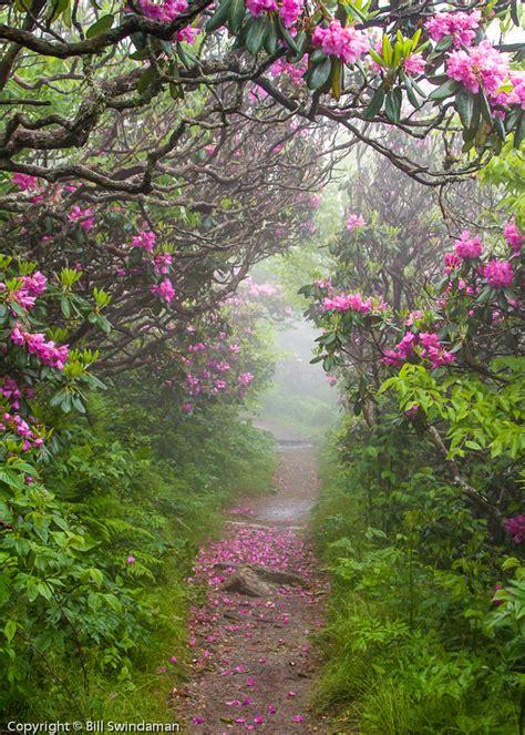 Craggy Pinnacle Trail Blue Ridge Parkway North Carolina Garden Ridge Flowers