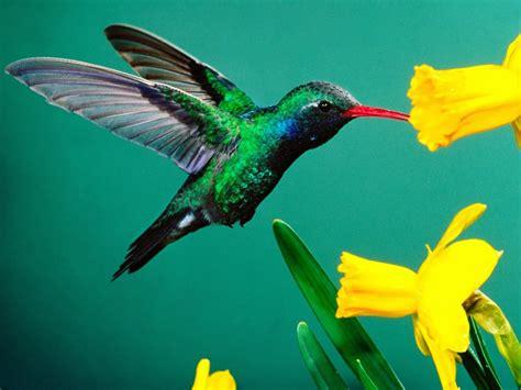 imagenes increibles de colibries las palabras del silencio el incre 237 ble colibr 237