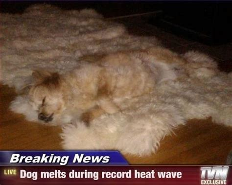 Funny Heat Memes - dog melts during record heat wave jokes memes pictures