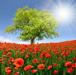 Landscape Pictures Of Flowers 春天风景下载 图片id 160292 山水风景 风景图片 图片素材 淘图网 Taopic