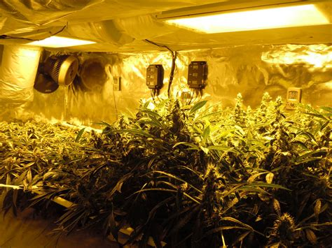 marijuana grow room grows soundrone army