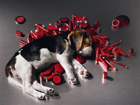 test su animali test cosmetici su animali una petizione per ribadire il no