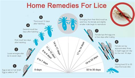 Lice Home Remedies home remedies for lice