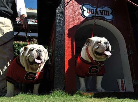 uga dawg house uga dawg house 28 images bulldogs ground on new dawg house curbed 17 best images