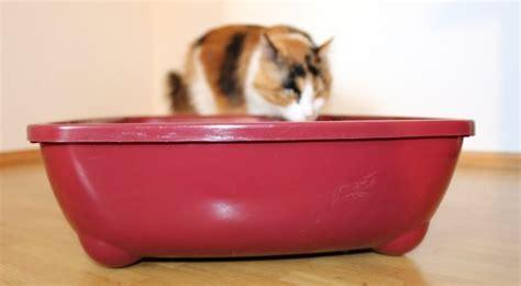 katzenklo nicht stinkt katzenklo tipps reinigen aufstellen