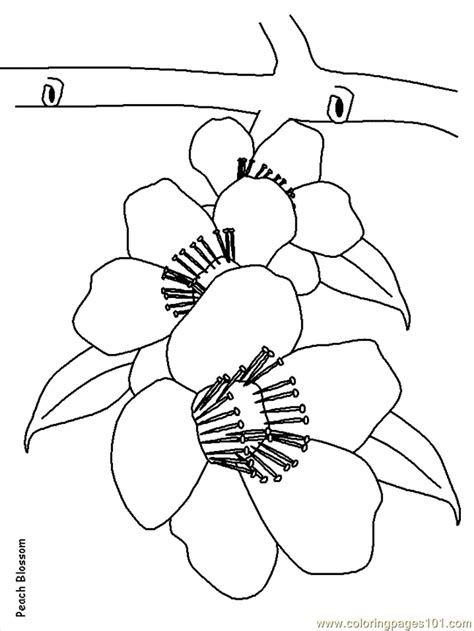coloring pictures of realistic flowers realistic flowers coloring pages