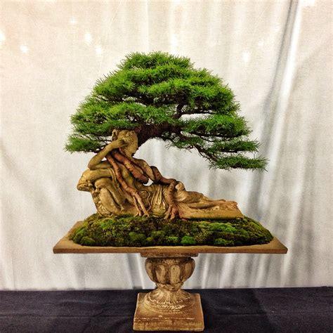 Bonsai Baum Arten by Rochester Or Bust My Trip To The 4th U S National Bonsai