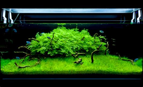 Ada Aquascaping by Aquacube Fabio Ghidini Aqua Green Cloud Massimo