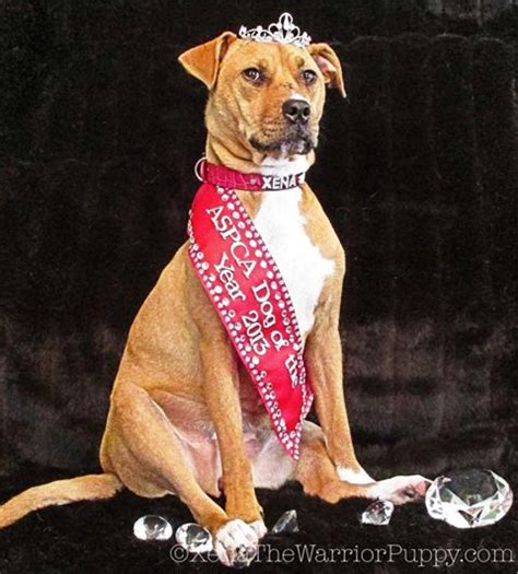 xena the warrior puppy xena the warrior puppy aspca s of the year for 2013 171 friends of dekalb animals