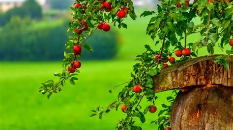 wallpaper hd 1920x1080 food apple tree wallpaper group with 73 items