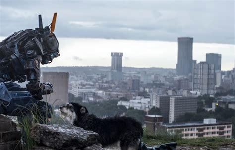 robot po imeni chappie film обои i am chappie chappie робот по имени чаппи i am