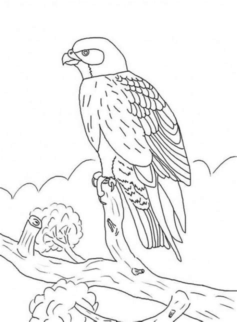 coloring pages of spirit animals kids falcon bird coloring pages ways to draw birds