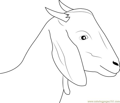 goat coloring pages kindergarten goat coloring pages printable of goats goat coloring