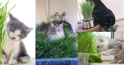 diy indoor cat garden  cat lovers balcony garden web