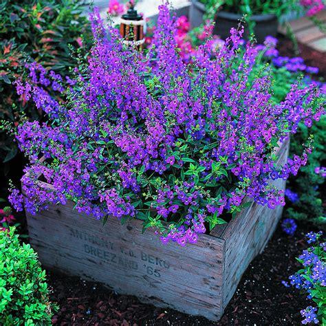 Garden Plants And Flowers Icangarden Gardening Resource Site