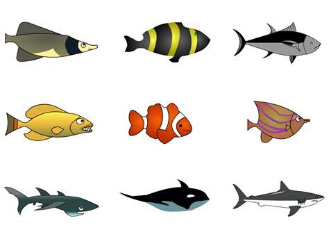 caracter ikan hdesign