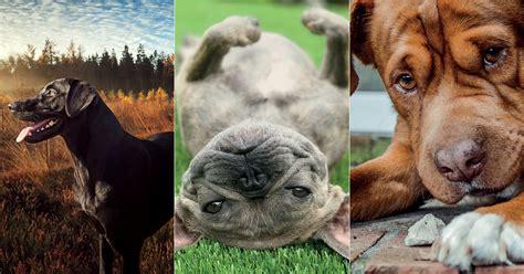 good dog photo contest winners garden gun