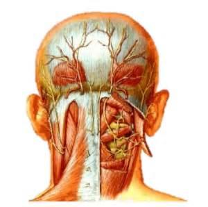 douleurs aux 233 paules au cou maux de t 234 te acouph 232 nes