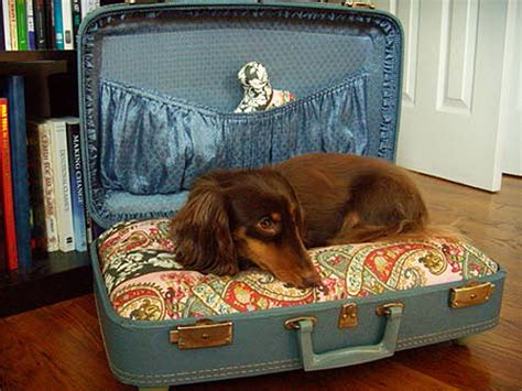 suitcase dog bed all things crafty diy dog or cat beds made from old