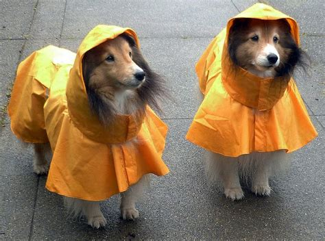 puppy raincoat top 5 best waterproof raincoats with 2018 edition