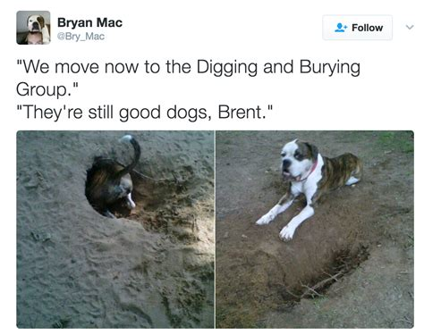 they re dogs brent the show they re dogs brent your meme