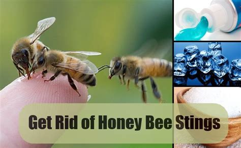 how to get rid of a beehive in your backyard get rid of honey bee stings with simple remedies find