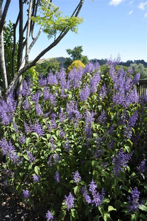 fiori viola cespuglio di fiori viola file di foto 1332311