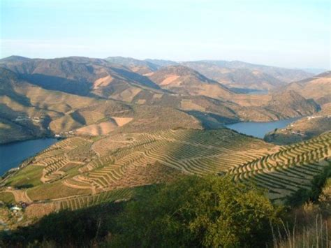 port the douro guides to wines and top vineyards books a beginners guide to port wine
