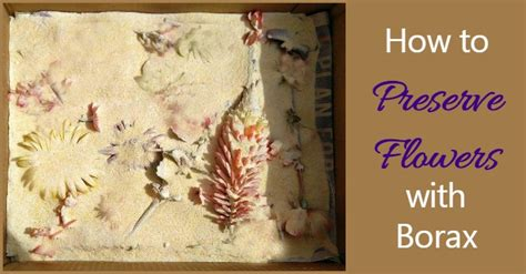 preserve flowers  borax tips   results