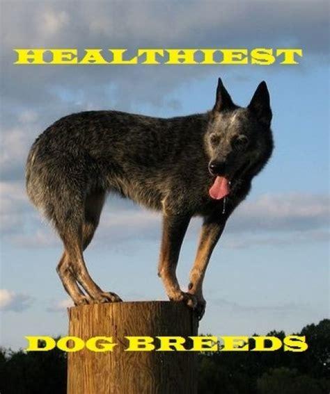 medium sized guard dogs best medium sized guard breeds pethelpful