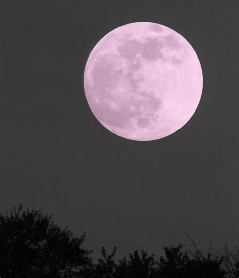 what is a pink moon live full pink moon show april 21 2016 old farmer s