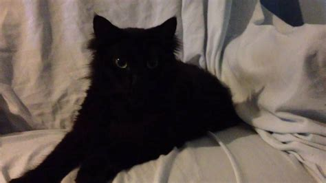 Sweet Black Cat by Baby The Sweet Black Cat